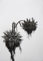 https://fredericmalette.com:443/files/gimgs/th-97_Frederic Malette-TOURNESOL-graphite-42x59,4cm-2016-Nantes-1.jpg