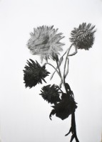 https://fredericmalette.com:443/files/gimgs/th-97_Frederic Malette-TOURNESOL-graphite-42x59,4cm-2016-Nantes-2.jpg
