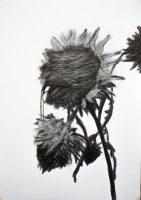 https://fredericmalette.com:443/files/gimgs/th-97_Frederic Malette-TOURNESOL-graphite-42x59,4cm-2016-Nantes-4.jpg